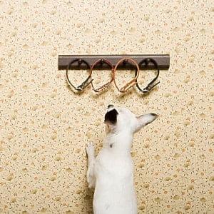 dog collar for gift