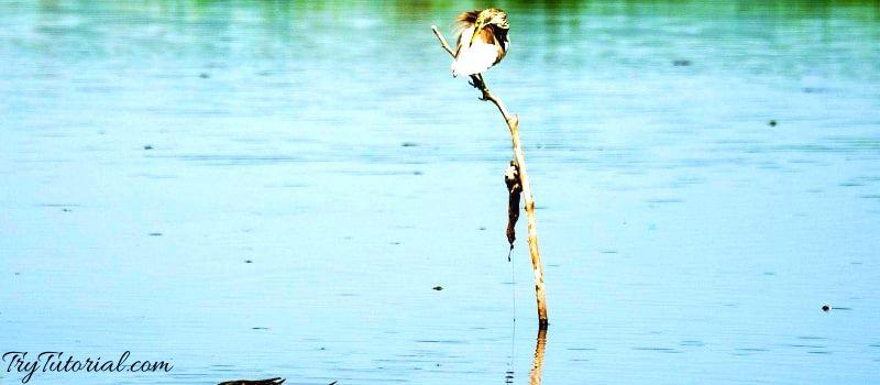 Go Bird Watching alleppey kerala