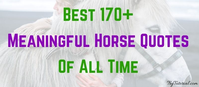 Meaningful Horse Quotes