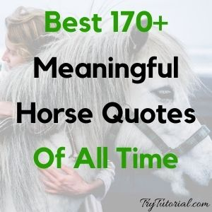 Best 170+ Meaningful Horse Quotes Of All Time