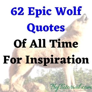 Epic Wolf Quotes