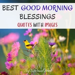Best Good Morning Blessings Quotes