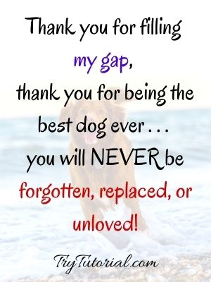 Best I Miss My Dog Death Quotes