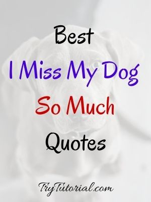 Best I Miss My Dog So Much Quotes