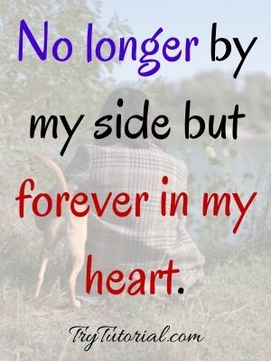 Comforting Dog Death Quotes