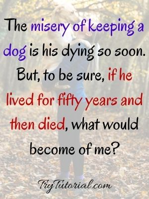 Dog Death Quotes For Short Message