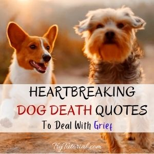 Dog Death Quotes To Grief