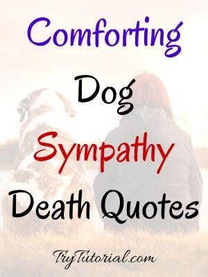 Dog Sympathy Death Quotes
