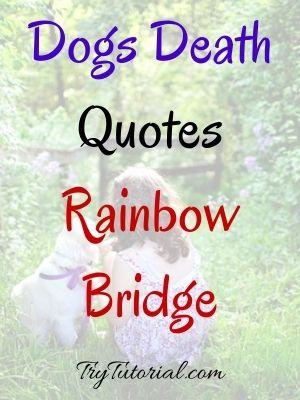 Dogs Death Quotes Rainbow Bridge