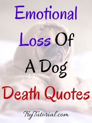 Loss Of A Dog Death Quotes