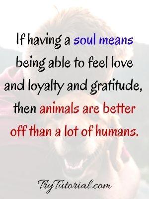 Grieving Pet Death Quotes