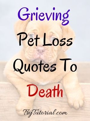 Grieving Pet Loss Quotes To Death