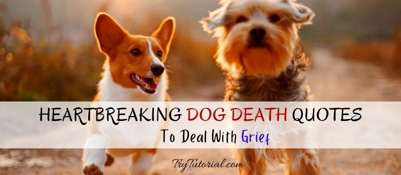 Heartbreaking Dog Death Quotes