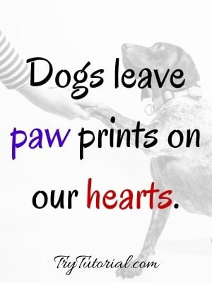 Message For My Dog Who Passed Away