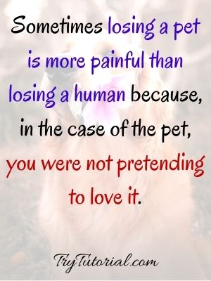 Pet Loss Quotes To Death