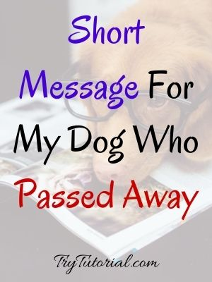 Short Message For My Dog Who Passed Away
