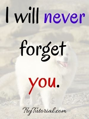 Short Quotes For My Dog Who Passed Away