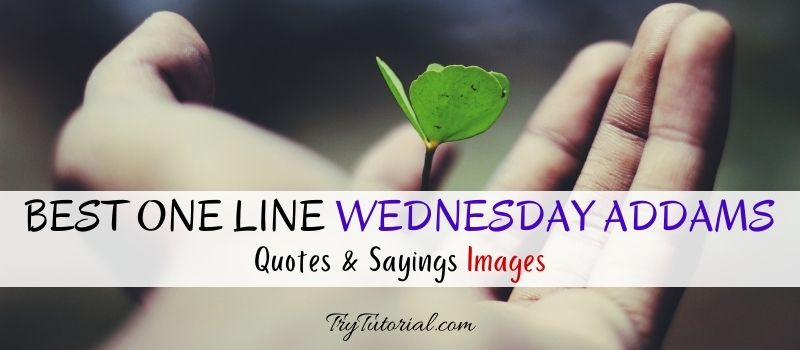 Best One Line Wednesday Addams Quotes & Sayings