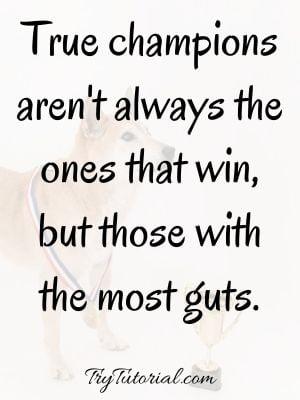 Championship Sayings On True Champions