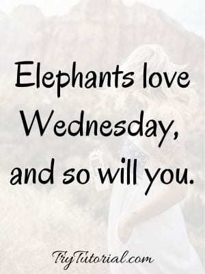 Midweek Wednesday Quotes