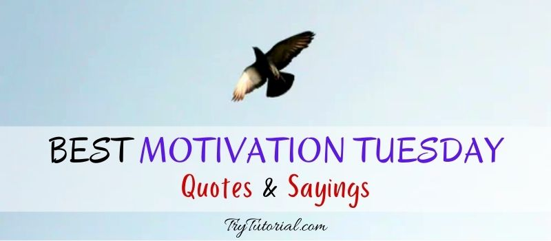 Motivation Tuesday Quotes And Sayings